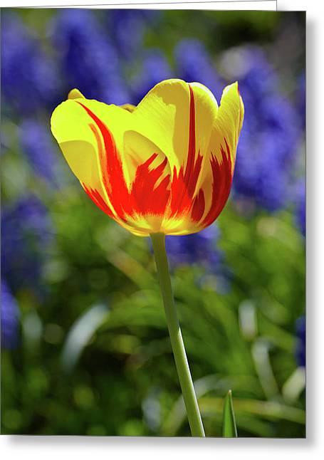 Tulip Flame Greeting Card
