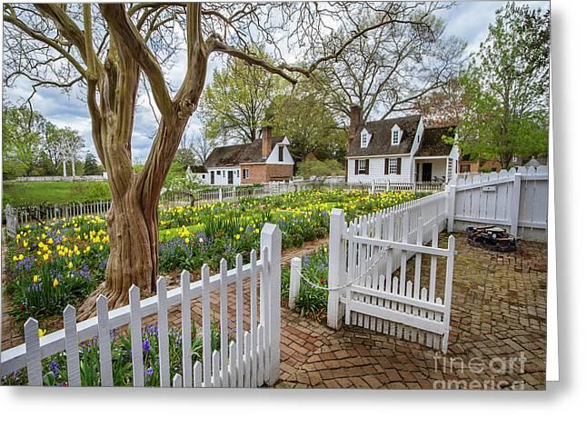 Tulip Garden Colonial Williamsburg  Greeting Card