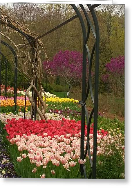 Tulip Garden  Greeting Card by Gayle Miller