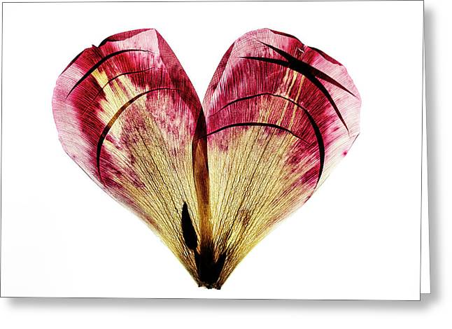 Tulip Heart Greeting Card by Nailia Schwarz