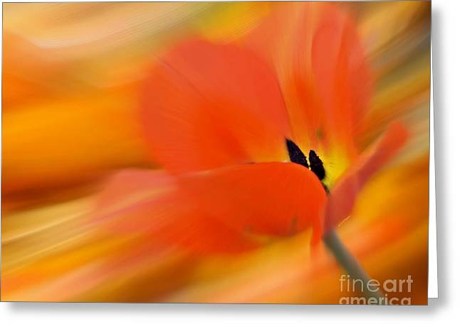 Tulip In Motion Greeting Card