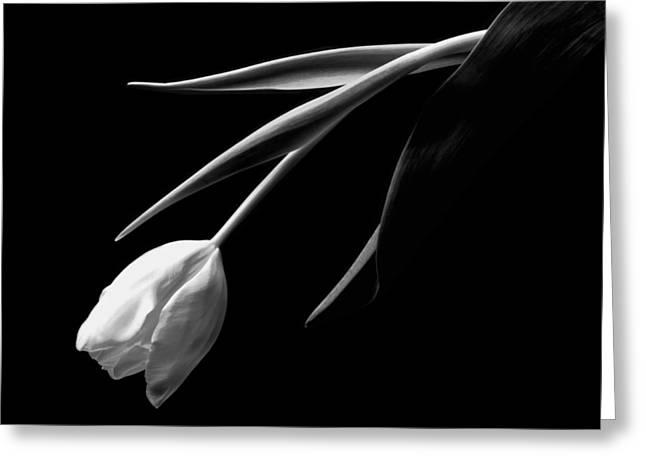 White Tulip Greeting Cards - Tulip Greeting Card by John Wong