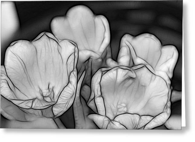 Tulip Line Study Greeting Card by Kevin  Sherf