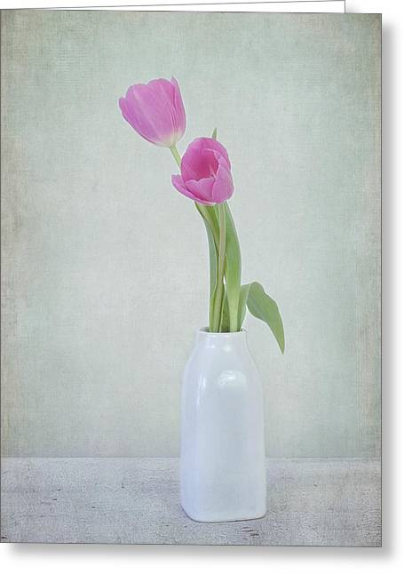 Tulip Love Greeting Card by Kim Hojnacki