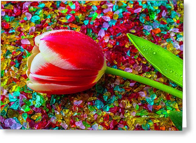 Tulip On Colored Glass Greeting Card
