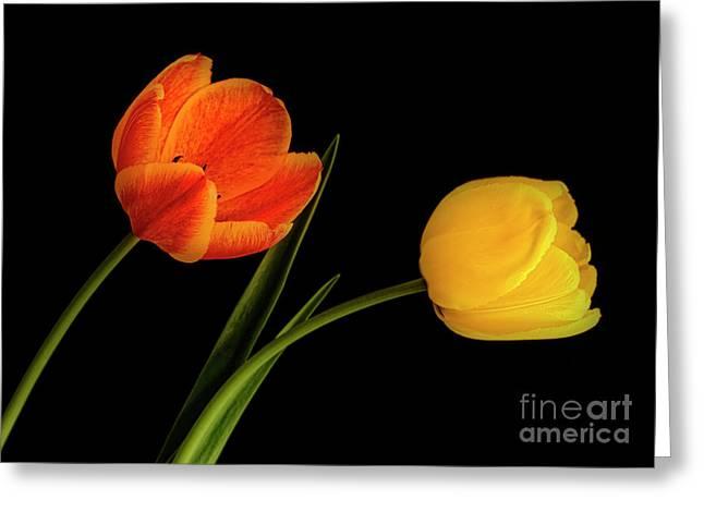 Tulip Pair Greeting Card