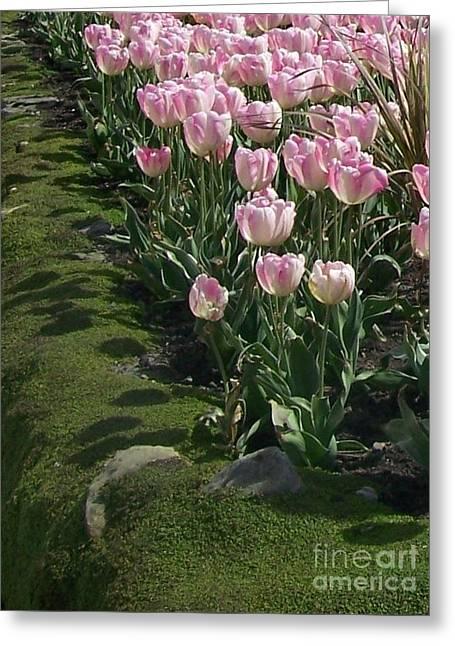 Greeting Card featuring the photograph Tulip Parade by Jolanta Anna Karolska