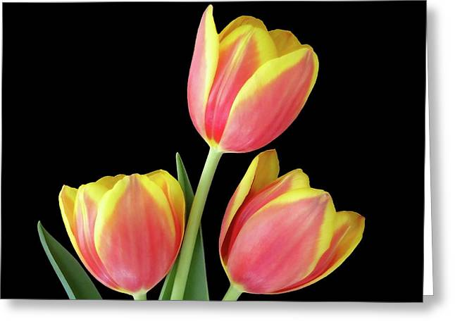 Tulip Passion Greeting Card