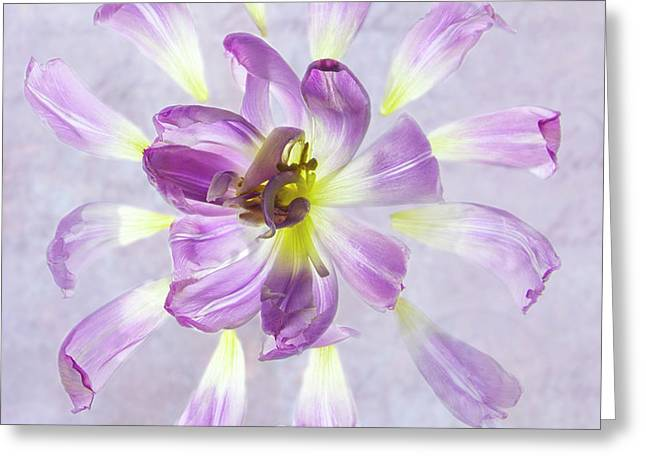 Tulip Patterns  Greeting Card