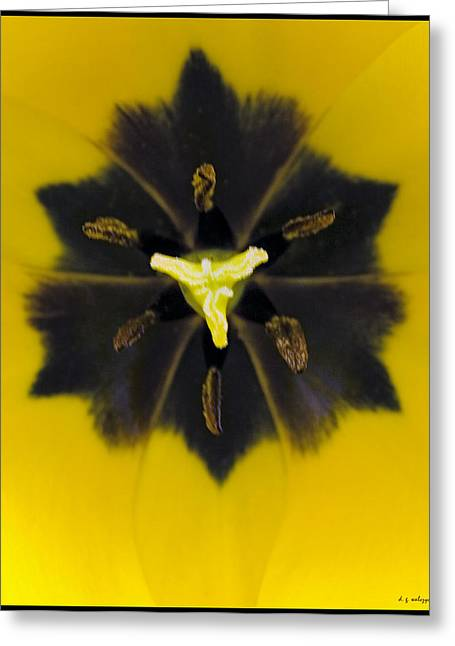 Tulip Pixie Greeting Card by Daniel G Walczyk