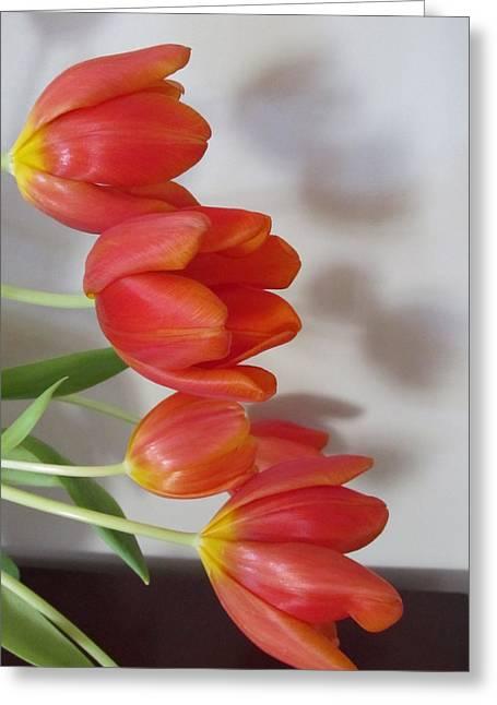 Tulip Shadow Greeting Card by Judith Turner