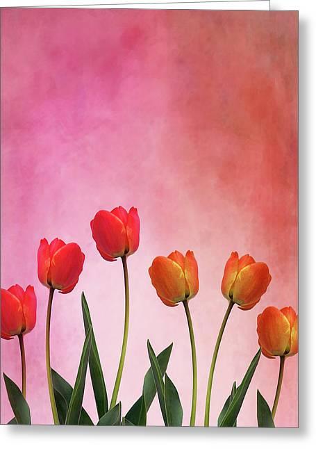 Tulip Six Greeting Card by Mark Rogan