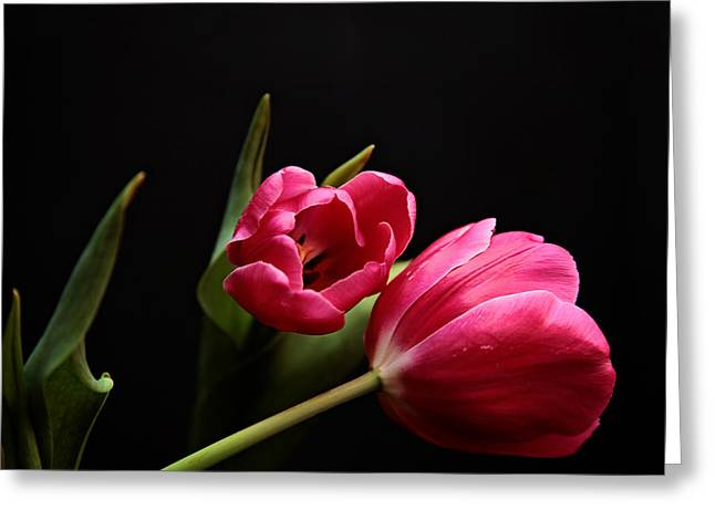 Tulip Study Greeting Card by Toni Hopper