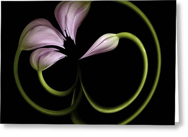 Tulip Swirl Greeting Card by Virginia Paul