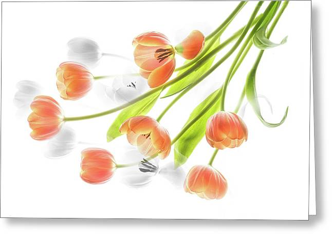 A Creative Presentation Of A Bouquet Of Tulips. Greeting Card