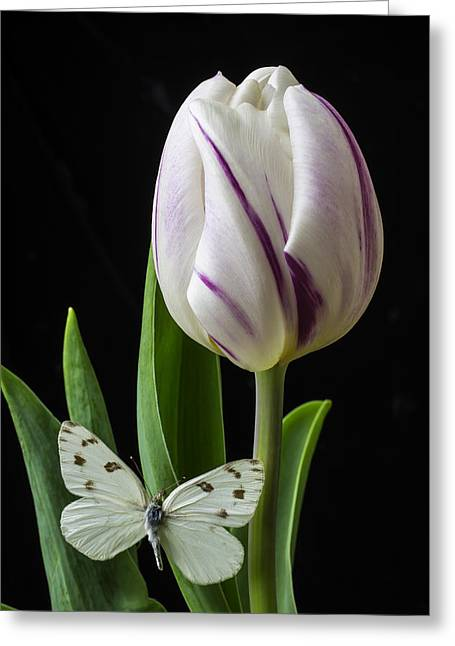 Tulip With White Butterfly Greeting Card