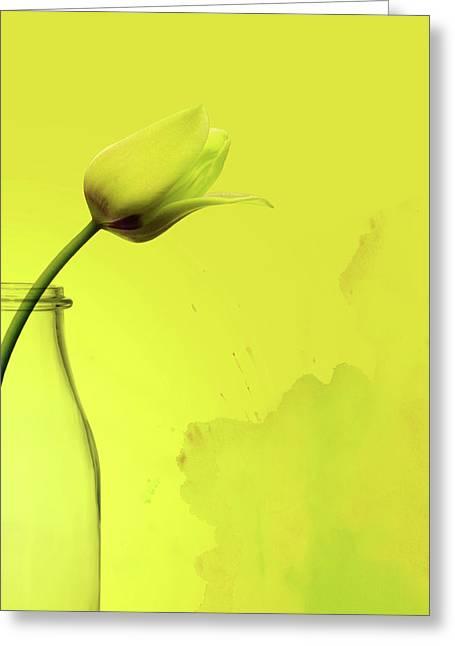 Tulip Yellow Greeting Card by Mark Rogan