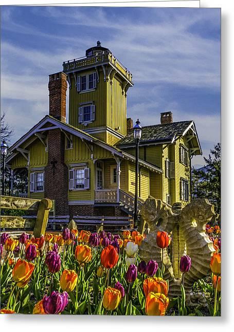 Tulips Af Hereford Light Greeting Card
