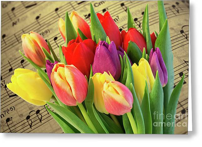 Tulips And Music Greeting Card by Steve Purnell