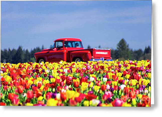 Tulips And Red Chevy Truck Greeting Card