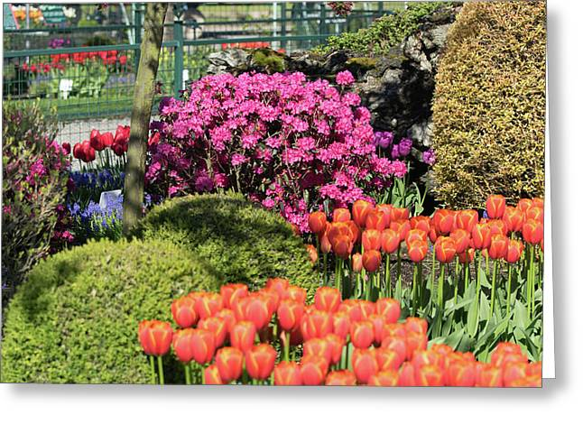 Tulips And Rhodies Greeting Card