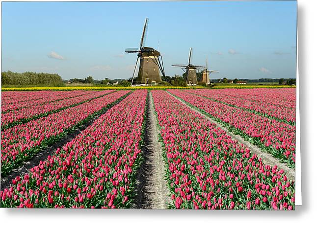 Tulips And Windmills In Holland Greeting Card by IPics Photography