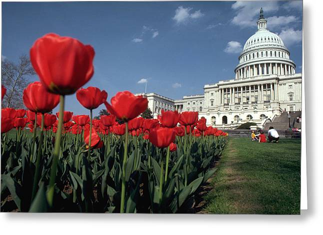 Tulips At The Capitol Greeting Card by Carl Purcell