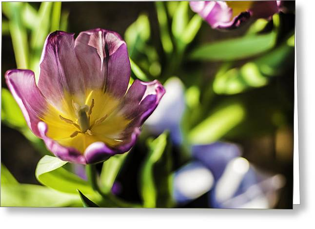 Tulips At The End Greeting Card