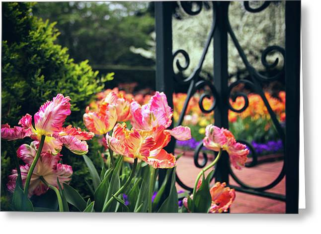 Tulips At The Garden Gate Greeting Card