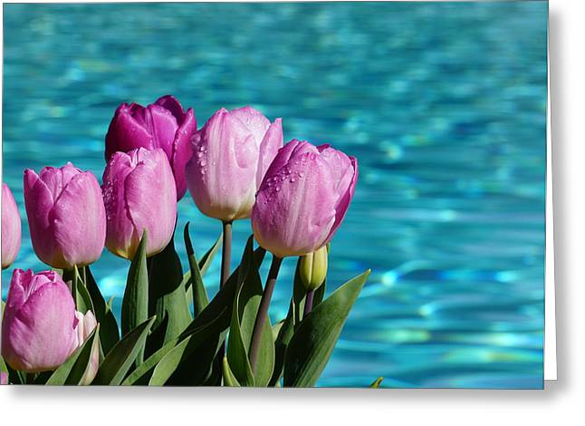 Tulips At Water Greeting Card by YT Photo