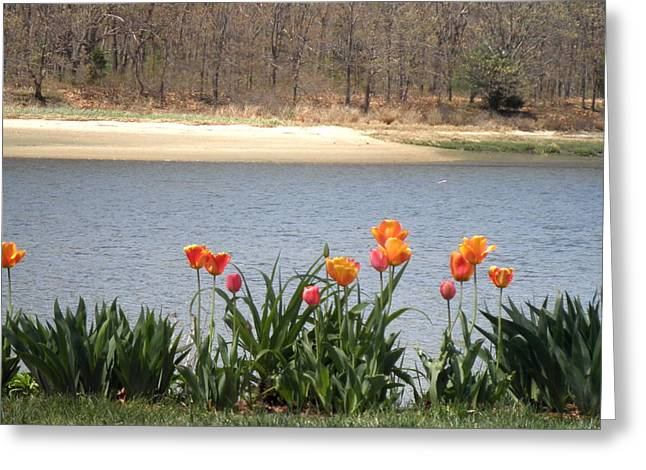 Tulips By The Bay Greeting Card