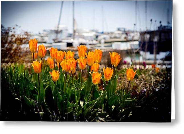 Tulips By The Harbor Greeting Card
