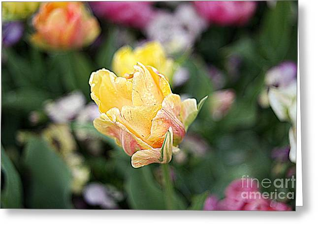 Greeting Card featuring the photograph Tulips by Diana Mary Sharpton