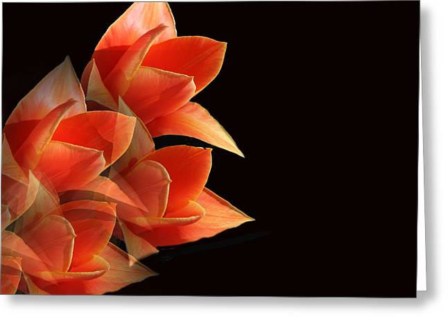 Tulips Dramatic Orange Montage Greeting Card