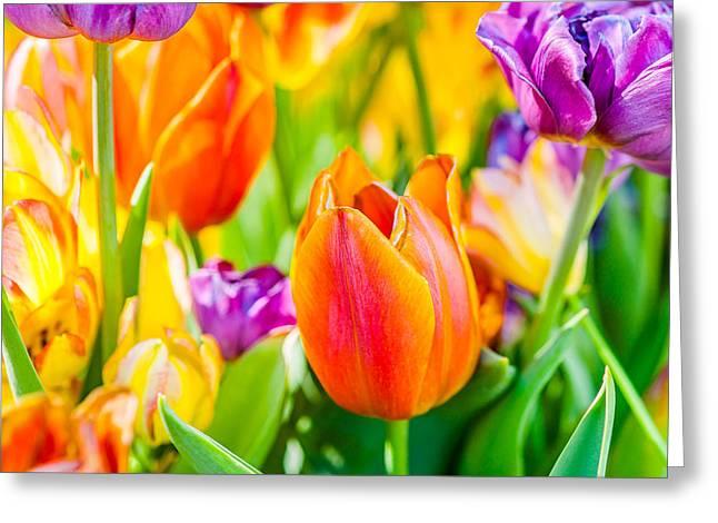 Tulips Enchanting 02 Greeting Card