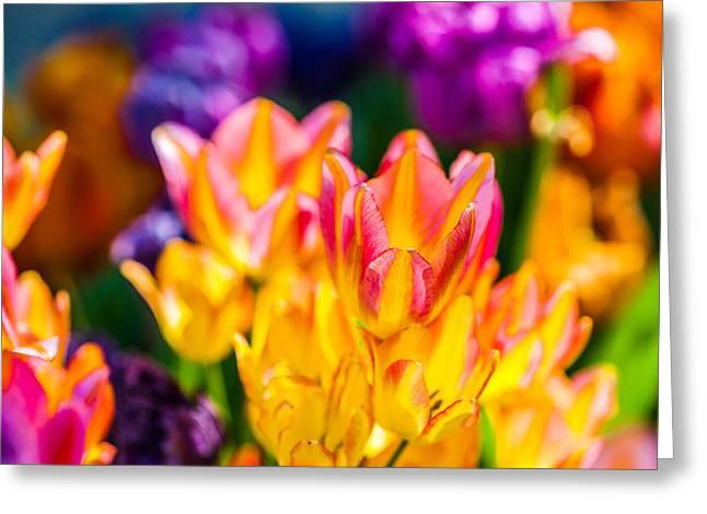 Tulips Enchanting 12 Greeting Card