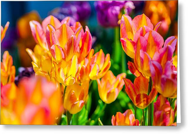 Tulips Enchanting 14 Greeting Card