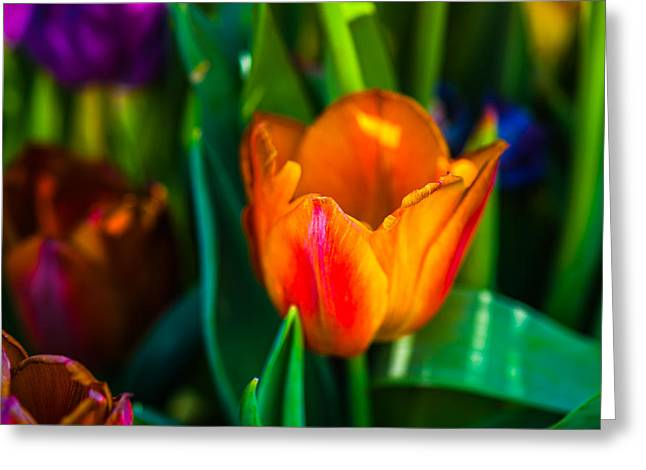 Greeting Card featuring the photograph Tulips Enchanting 44 by Alexander Senin