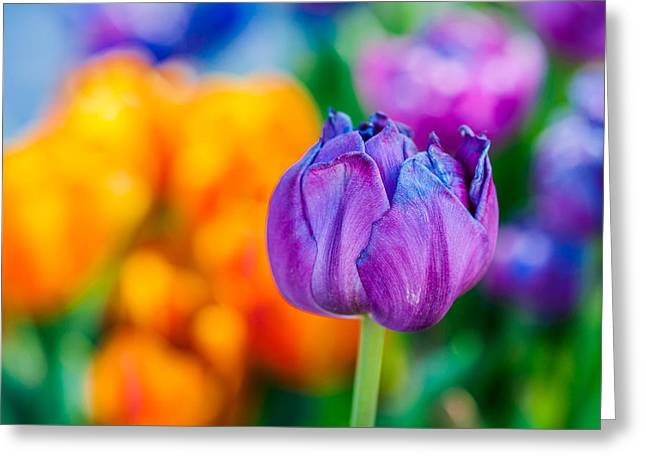 Greeting Card featuring the photograph Tulips Enchanting 46 by Alexander Senin