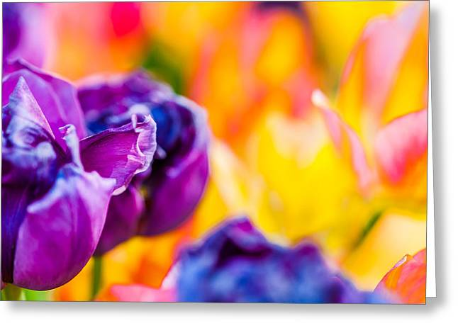 Greeting Card featuring the photograph Tulips Enchanting 49 by Alexander Senin