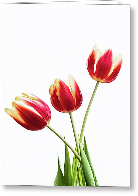 Tulips For My Love Greeting Card