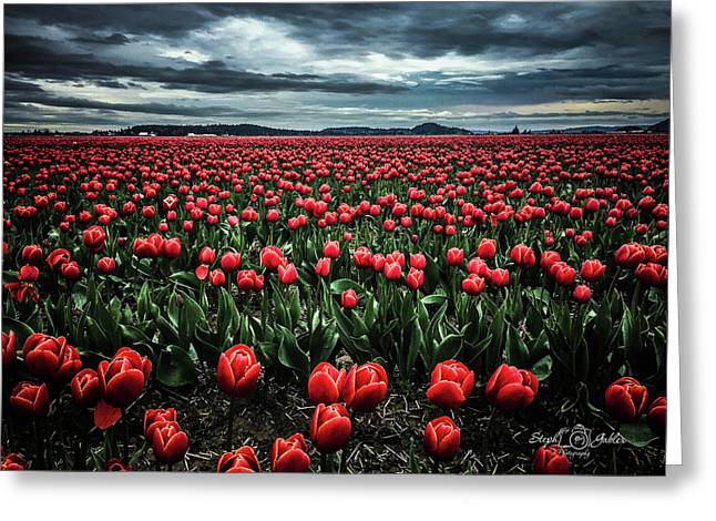 Tulips Forever Greeting Card