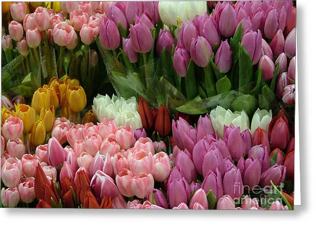Greeting Card featuring the photograph Tulips Galore by Terri Thompson