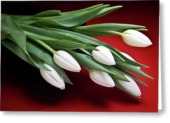 Tulips I Greeting Card by Tom Mc Nemar
