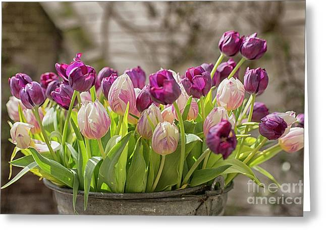 Greeting Card featuring the photograph Tulips In A Bucket by Patricia Hofmeester