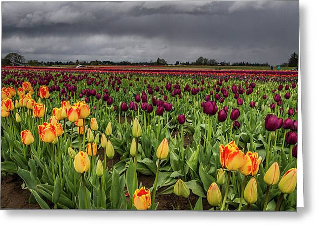 Tulips In A Storm Greeting Card by Jean Noren
