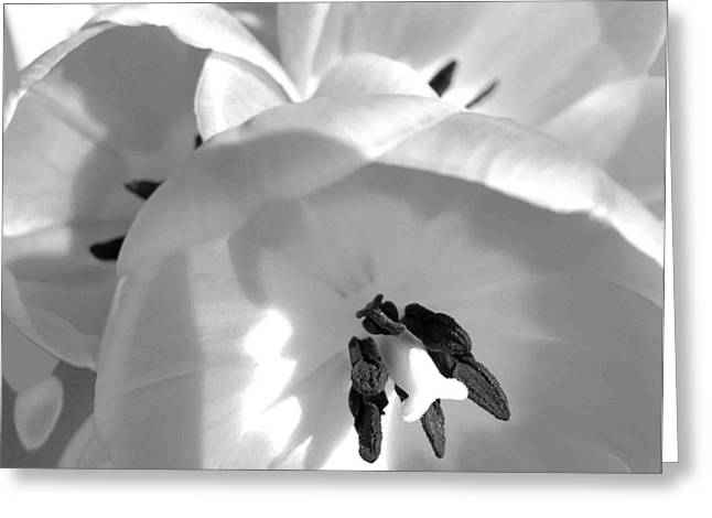 Tulips In Black And White Greeting Card by Evguenia Men