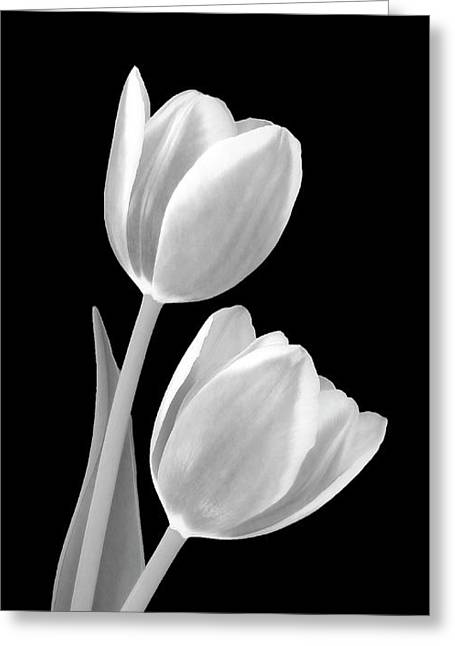 Tulips In Black And White Greeting Card