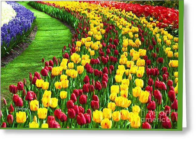 Tulips In Glorious Bloom Greeting Card