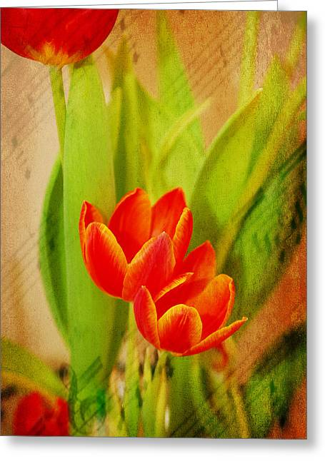 Tulips In Harmony Greeting Card by Mary Timman